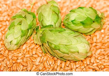 Green hops and malt, , agricultural background - Green hops...