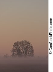 Group of trees without leaves in morning fog