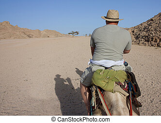 Man riding a camel viewed from behind