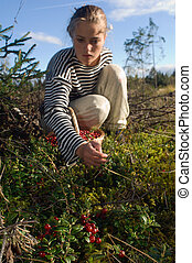 Cowberry gathering - In August in the northwest of Russia...