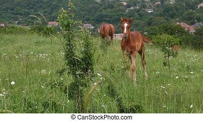 young horse graze on green grass field