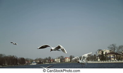 A flock of gulls on the city quay of the lake