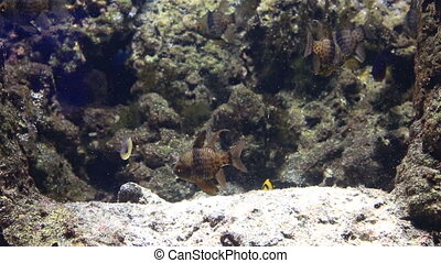 Beautifully decorated Marine Aquarium stock footage video -...