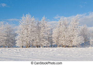 View on the winter trees - View on trees in Winter season in...