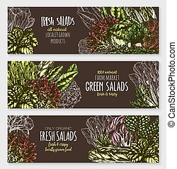 Salads and leafy vegetables vector banners set - Fresh green...