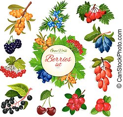 Vector icons set of berries and wildberry fruits - Berries...