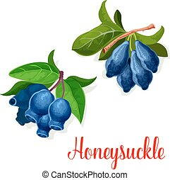 Honeysuckle seed fruits vector icon - Honeysuckle icon....