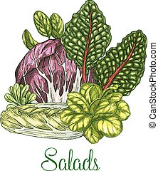 Salads and leafy vegetables vector poster - Lettuce salads...