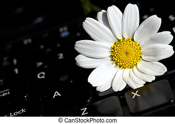 White Daisy Flower on Laptop