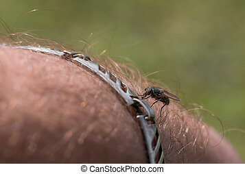 fly perched on hand of man close-up