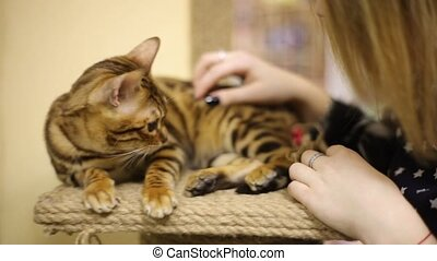 Asian woman girl pampering with a brown cat. Provokes a...