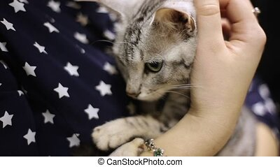 Girl stroking a worried gray cat, cat's face close-up