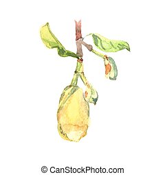 Fetus jackfruit watercolor tropical leaves isolated on white...