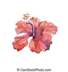 Red hibiscus flower watercolor tropical leaves isolated