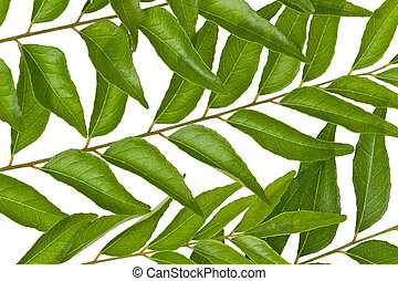 Curry Leaves - Several fresh curry leaves against a white...