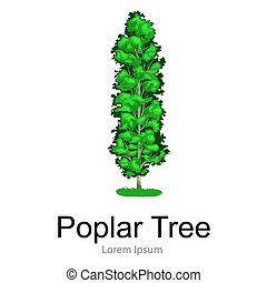 Cartoon isolated poplar summer tree on a white background...