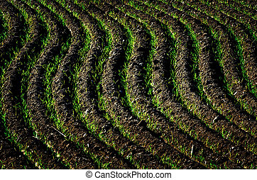 Farm Field Ploughed Dirt Ground Furrows Ready for Planting -...
