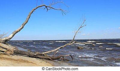 Sea waves and tree on the beach