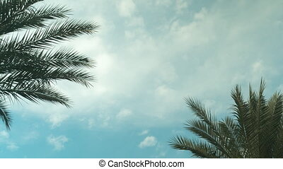 Palm Tree Sky Cloud Time Lapse High quality 10bit footage....