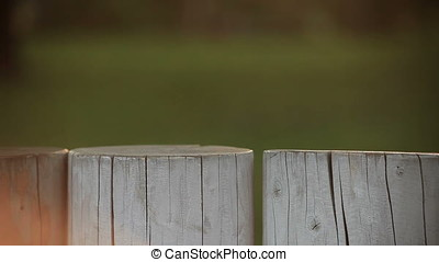 Children Playing Behind Wood Block Fence - Children playing...