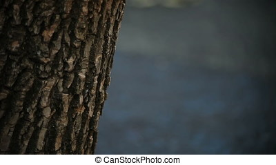 Sharp Clear Tree Bark Blurry Background Playground Vertical...