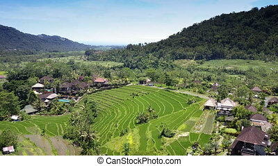 Aerial view from drone on rice terraces. Indonesia. Bali. -...