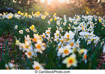 flowers on a meadow in the morning in the spring. Spring...