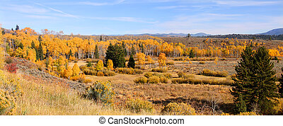 Autumn Panorama - Panoramic landscape of Autumn trees in...