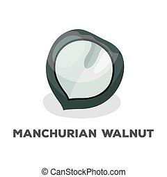 Manchurian walnut.Different kinds of nuts single icon in...
