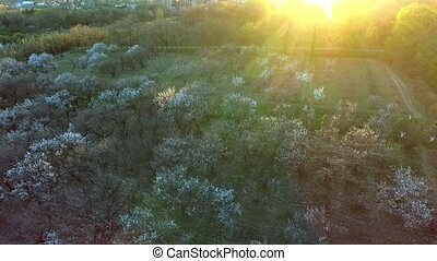 beautiful spring trees background. aerial view. fly over. forest woods tree. springtime