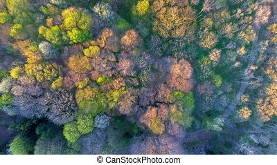 Aerial shot of trees in beautiful Fall color