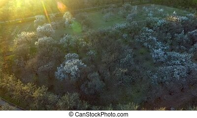 beautiful spring trees background. aerial view. fly over. forest woods tree.