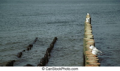 sea gull on groin in the Baltic Sea, Summer, sunny weather,...