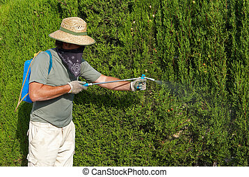Gardener spraying pesticide - A gardener spraying a lush...