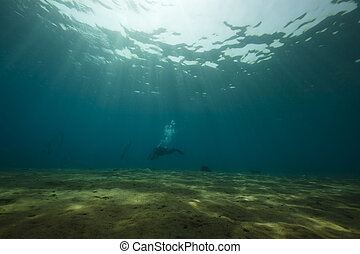 diver and ocean