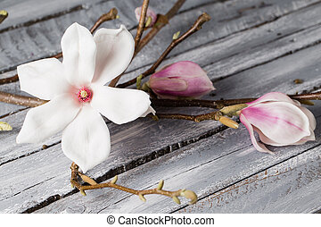 flowers magnolia on wood table. Magnolia stellata . Still...