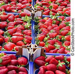boxes of ripe red strawberries for sale in a fruit and...