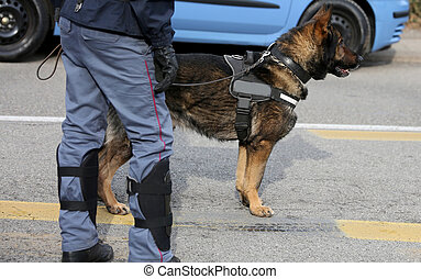 police dog while patrolling the city streets to prevent...