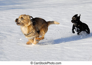 Two dogs running fast in snow