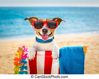 dog realxing on beach chair - jack russel dog resting and...