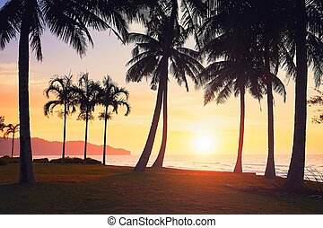 Amazing sunset on the beach - Silhouette of the palm trees...
