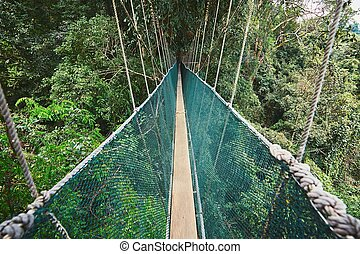 Canopy walk in rainforest - Long elevated walkway through...