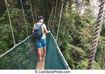 Canopy walk in rainforest - Tourist on the elevated walkway...