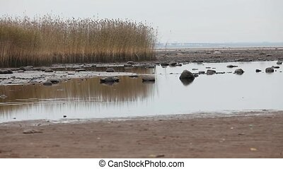 beach at low tide wetland