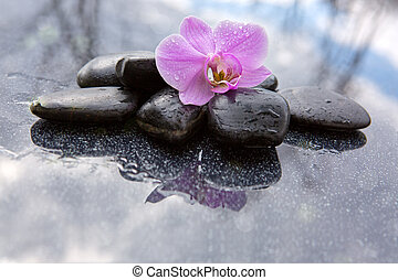 Single orchid flower and black stones.