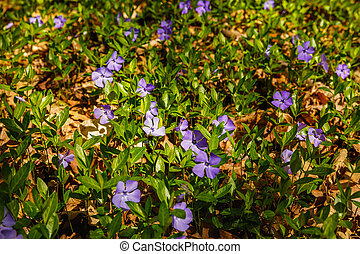 beautiful spring flowers in the forest