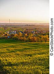 alfalfa, cultura, campo, primavera