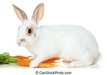 Rabbit with carrots - Image of cautious rabbit with juicy...