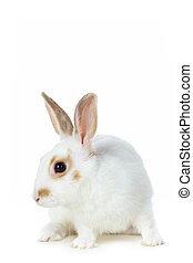 White rabbit - Image of cautious rabbit sitting in isolation