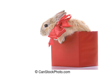 Rabbit in box - Image of fluffy rabbit with red bow in red...